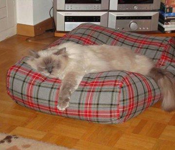 Dog's Companion Kattenkussen Scottish Grey