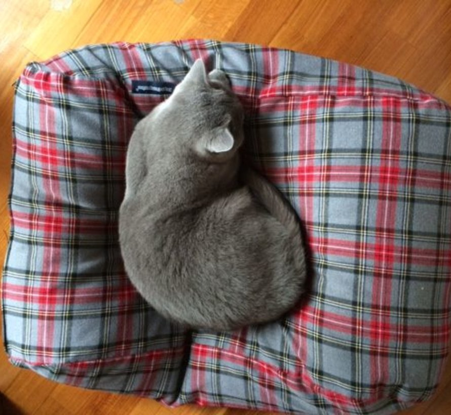 Coussin pour chat scottish grey
