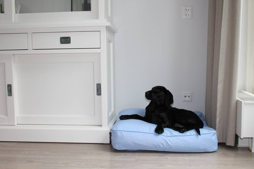Dog S Companion Dog Bed Bench Cushion Light Blue 68 X 62 X 10 Cm