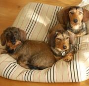Dog's Companion Lit pour chien Country Field (rayé) Superlarge