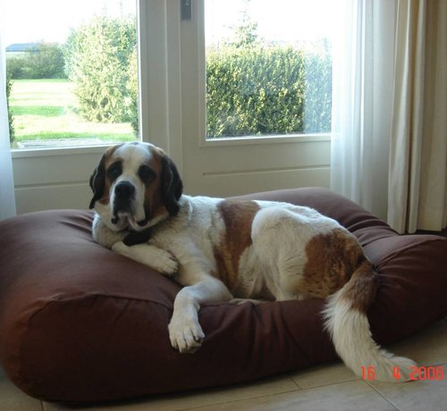 Dog's Companion Dog bed Chocolate Brown Medium