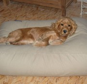 Dog's Companion Hondenbed Beige Small