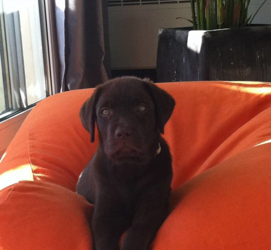 Hundebett Orange Medium