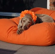 Dog's Companion Dog bed Orange Superlarge