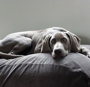 Dog's Companion Hundebett Mausgrau (Cord) Small
