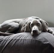 Dog's Companion Dog bed Mouse Grey (Corduroy) Superlarge