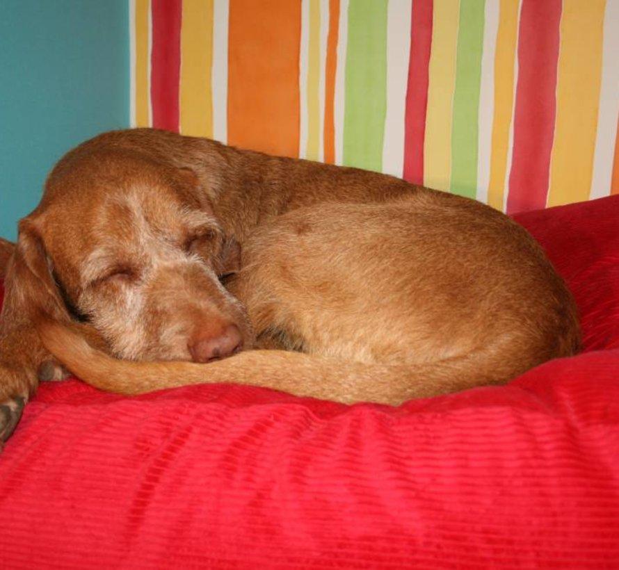 Hundebett Rot (Cord) Small