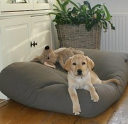 Dog's Companion Dog bed Mouse Grey Superlarge