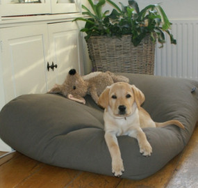 Canvas dog beds
