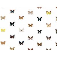Naturalis Originals - 160 soorten vlinders