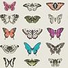 Harlequin Harlequin behang Papilio