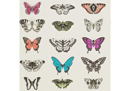 Harlequin Papilio