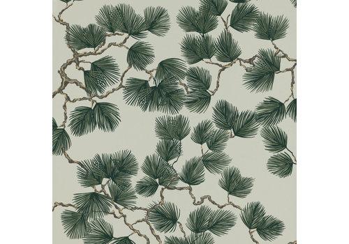 Sandberg Pine