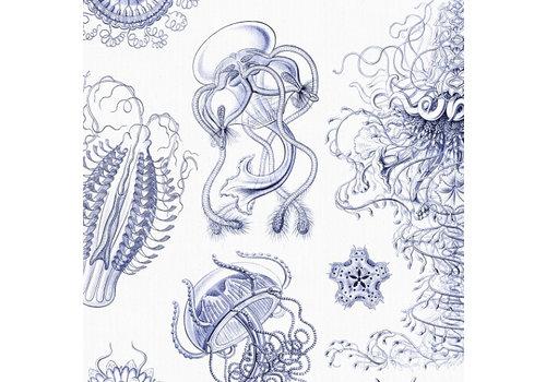 Naturalis Originals Delfts blauwe kwallen