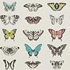 Harlequin Harlequin - Papilio