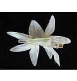 Haarbloem Orchidee Wit/Geel