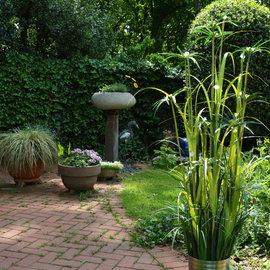 Beleuchteter Zwiebelgras-Strauch mit Bambusblüten- 05727