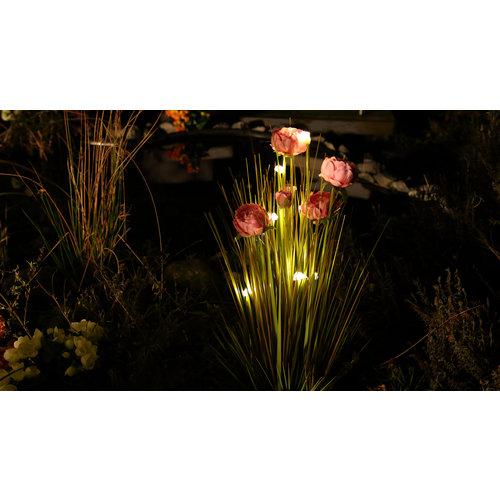 Beleuchteter Zwiebelgras-Strauch mit Pfingstrosen- 04986