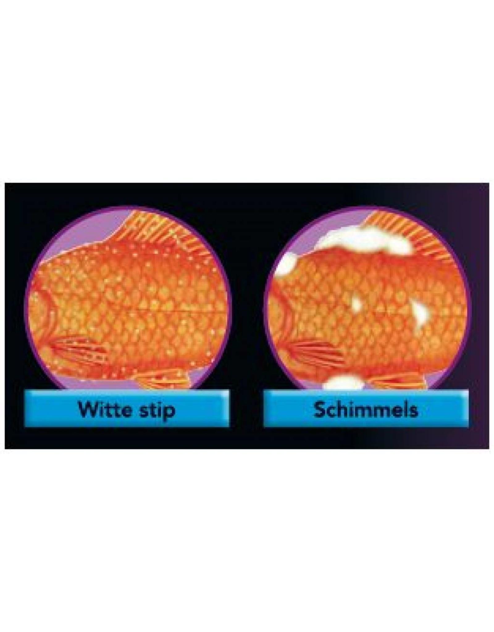 Colombo Morenicol FMC-50 tegen witte stip, schimmels en eencellige parasiten..