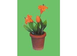 Euromini's Oranje bloemen in pot