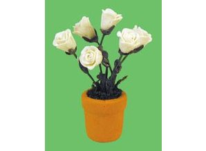 Euromini's Witte rozen in pot