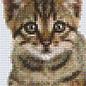 Pixel Hobby Pixelhobby 2 Basisplaten Kat