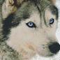 Pixelhobby 6 Basisplaten - Wolf 02