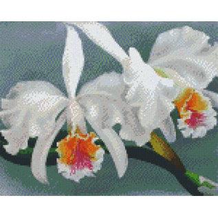 Pixel Hobby Pixel Hobby 9 Grundplatten Orchidee