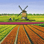 Pixel Hobby Pixel Hobby 9 Grundplatten Tulpenfeldmühle