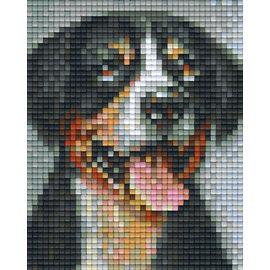 Pixel Hobby Pixelhobby 1 Basisplaat Zwitserse-Sennenhond