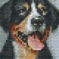 Pixel Hobby Pixel Hobby 1 Grundplatte Schweizer Sennenhund