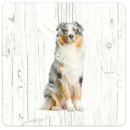 Creatief Art Hond Australian Shepherd Dog | Houten Onderzetters 6 Stuks