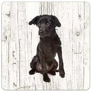 Creatief Art Hond Markiesje | Houten Onderzetters 6 Stuks