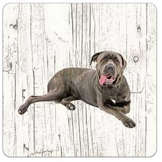 Creatief Art Hond Cane Corso | Houten Onderzetters 6 Stuks
