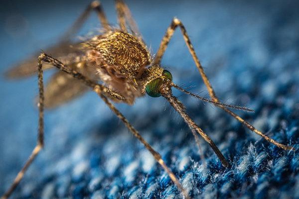 Muggen, Vliegen