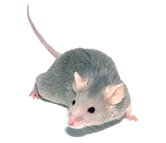 Ratten & Muizen