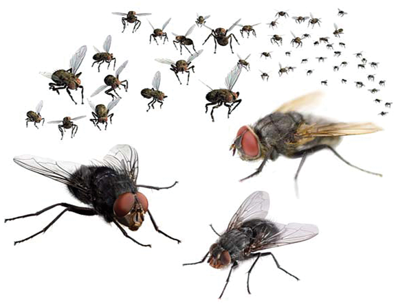 Vliegenoverlast zorgt voor minder melkgift!