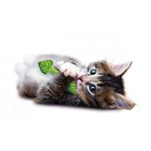 Gebitsverzorgend Speeltje voor Katten - Petstages