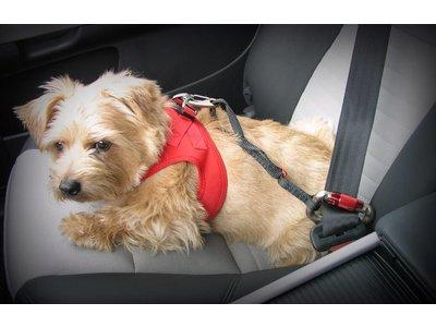 Autogordel Hond voor Veilig Rijden in de Auto voor Kleine en Middelgrote Honden - Curli - in 30cm of 60cm