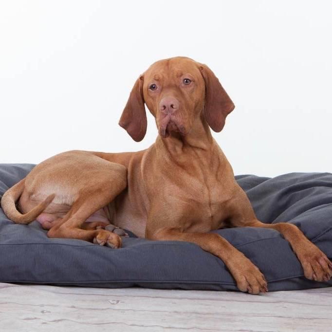 Hondenkussen Rebel Petz Basic in Grijs, Taupe en Zwart