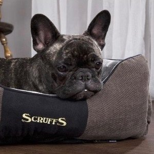 Zachte mand voor Kleine Hondjes