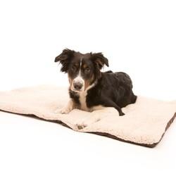 Opvouwbare Reisdeken voor Honden in 2 kleuren