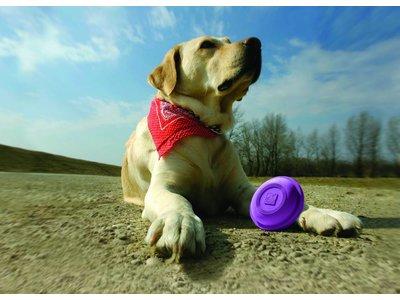 Winga Werpstok voor Honden met Disc