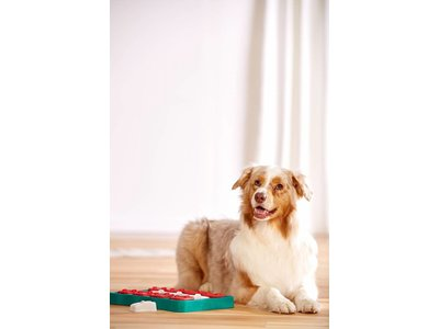 Honden Train Spel voor Snacks - Interactief Level 2 Spel - Outward Hound Dog Brick Blu