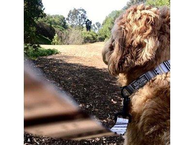 Trendy Honden Halsband met mooie lichte kleuren - Wolfgang WhiteOwl - in Small, Medium en Large