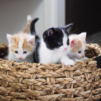 leuke-kattenmand-en-kattenhuis-in-blauw-en-grijs