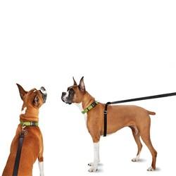 Anti Trek Hondenriem tegen Trekken
