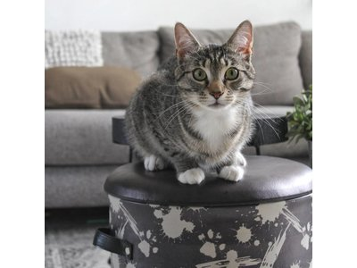 Lederlook Kattenhuis Bucket
