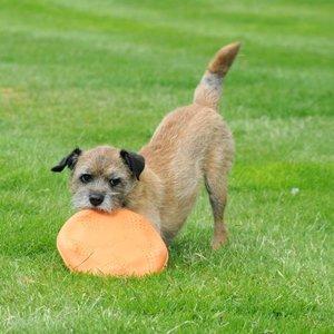 Beco Flyer - Frisbee voor honden van ecologisch rubber