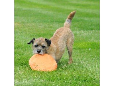 Duurzame , Sterke Frisbee voor Honden van natuurlijk en ecologisch afbreekbaar Rubber - Beco Pets Beco Flyer